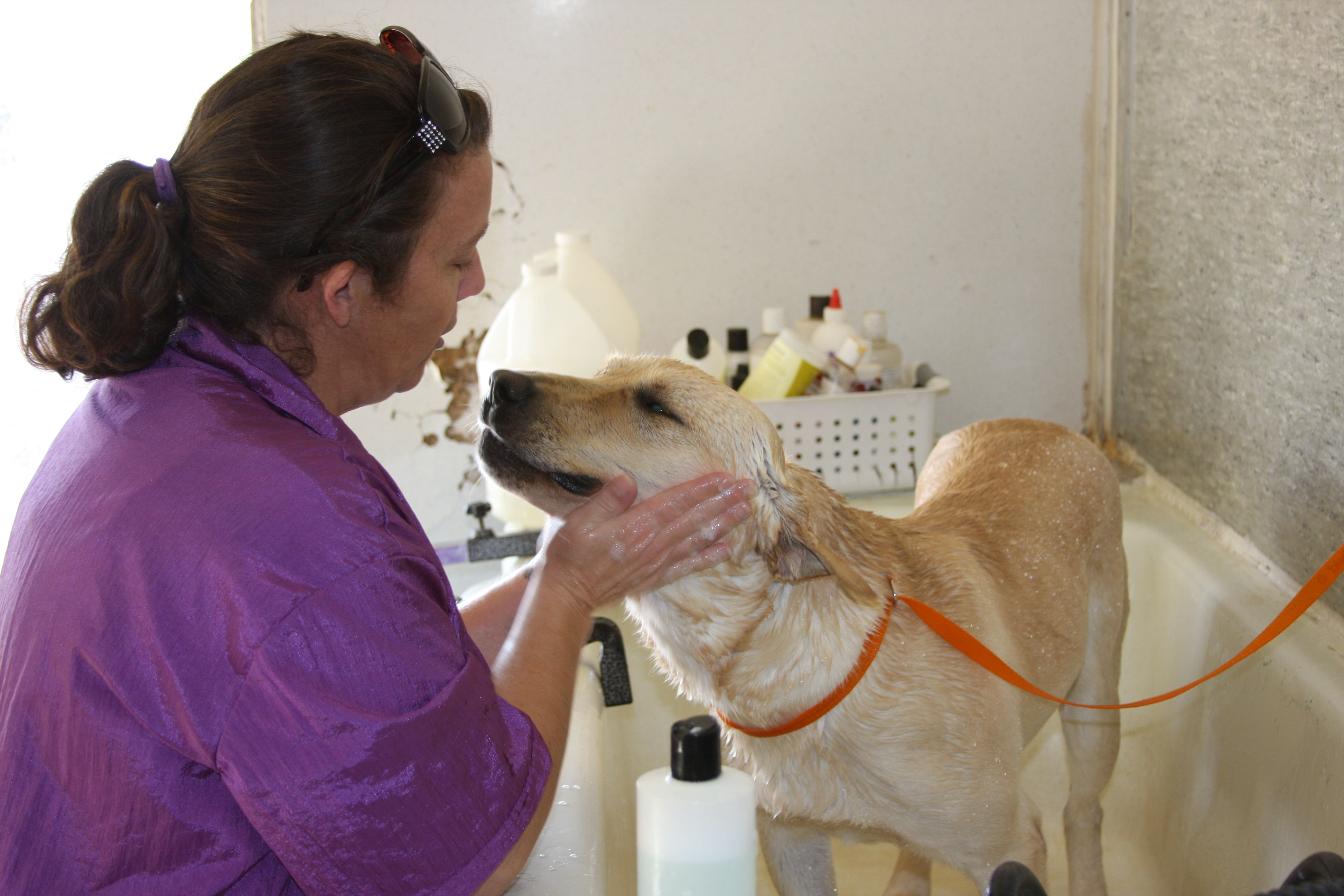 Camino Verde Pet Resort grooming