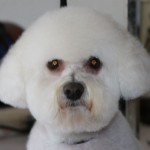 best prices on grooming in Tucson