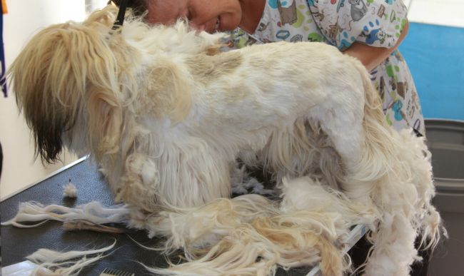 Matted dogs to groom